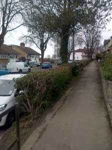 Banstead Road's recently-pruned hedges